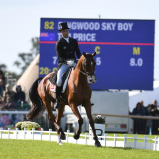 Tim Price RINGWOOD SKY BOY LRBHT PN19 113809