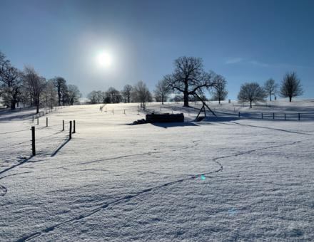 Snow February 2021