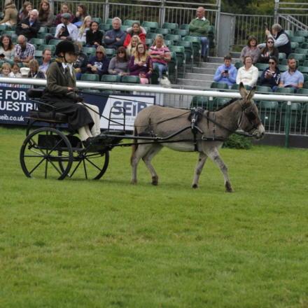 Donkey Parade Burghley PN17 94183