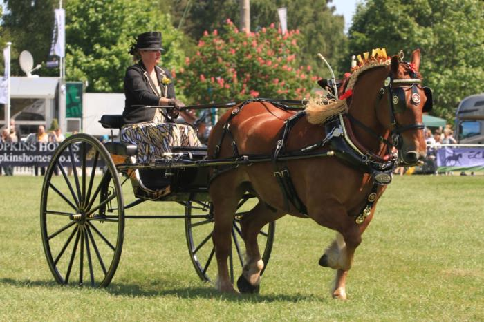 Suffolk Punch Ladies cart